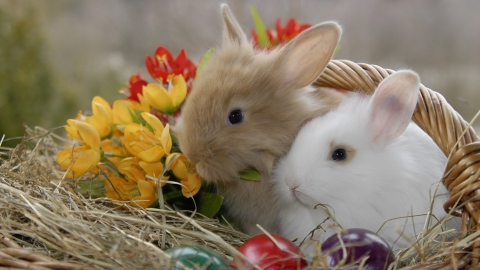 Quiz Wielkanocny